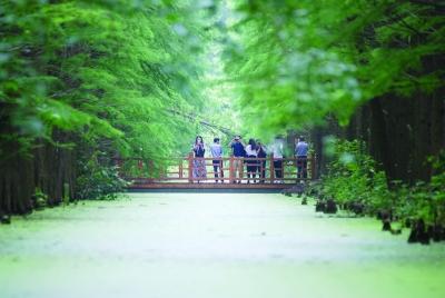 金湖水上森林公园图片